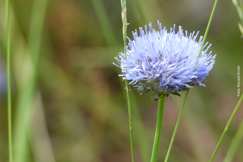 Auch viele Pflanzen haben am Flughafensee eine Heimat gefunden.