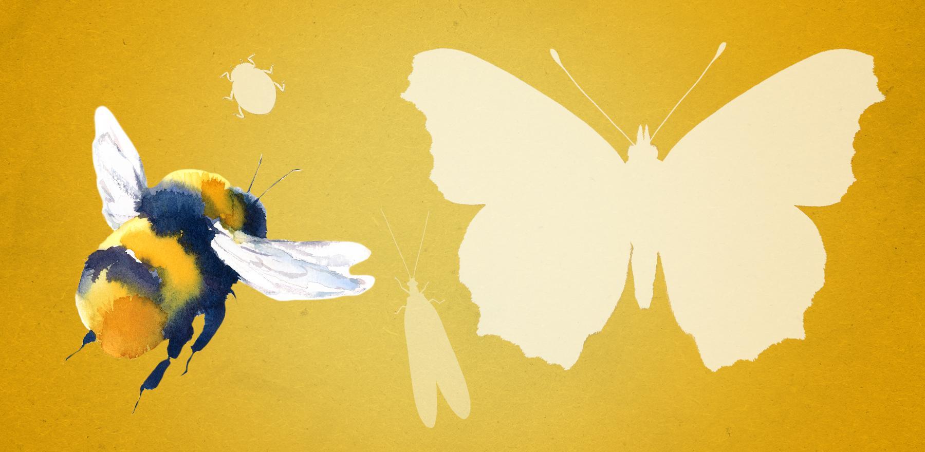Jetzt Insekten & Co. retten!