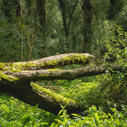 Mehr Informationen zum Vollhöfner Wald