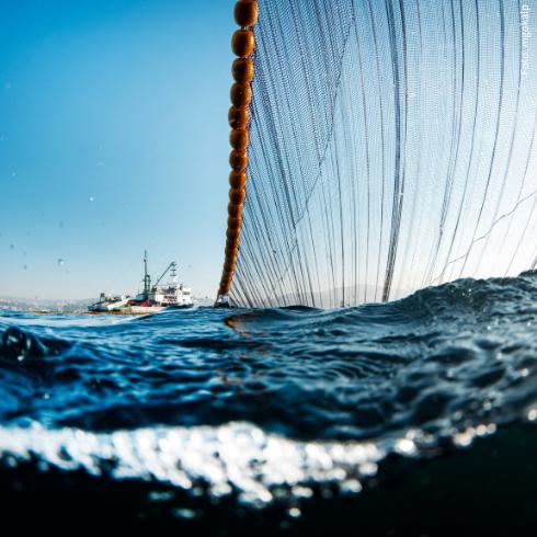 Überfischung bedroht unsere Meere
