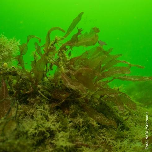 Streng geschützte Riffe sollen abgebaggert werden